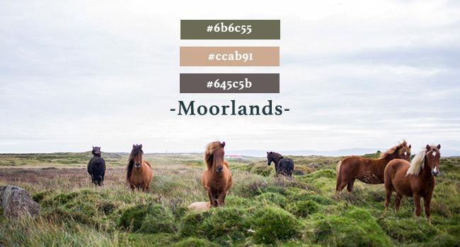 moorlands colour palette