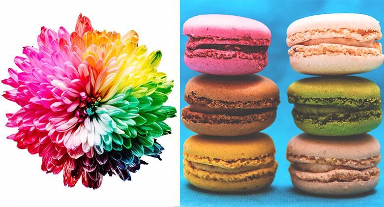multicolouredleaves